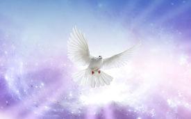 foto of baptism  - White dove in a blue purple sky symbol of faith - JPG