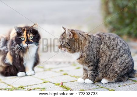 Cat On A Street In The City With Another Cat On Background