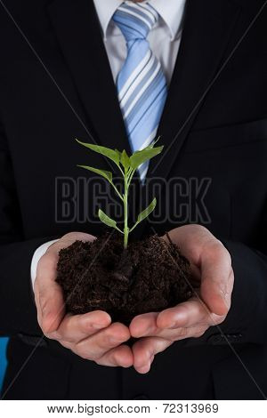 Businessman Holding Sapling