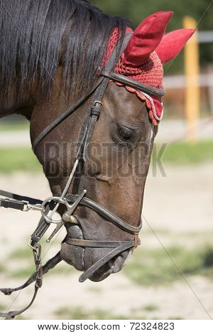 Horse head with red protection cap