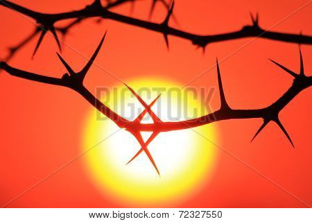 Red Thorn Sunset - Nature Background of Shapes