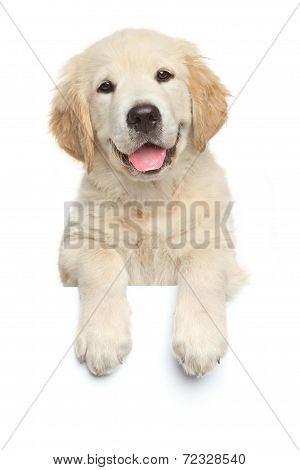 Labrador Retriever Puppy Above Banner