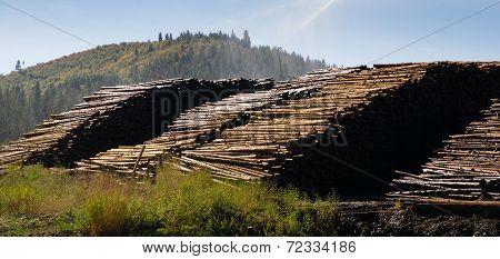 Large Timber Wood Log Lumber Processing Plant Logging Industry