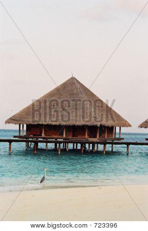 Heron By Hut At Maldives