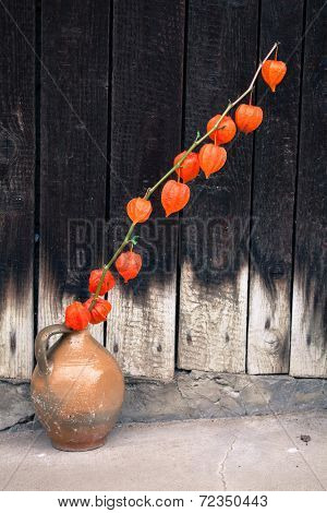Orange flower - bladder cherry