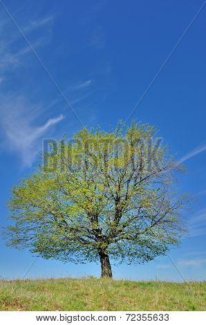 One single wonderful spring tree