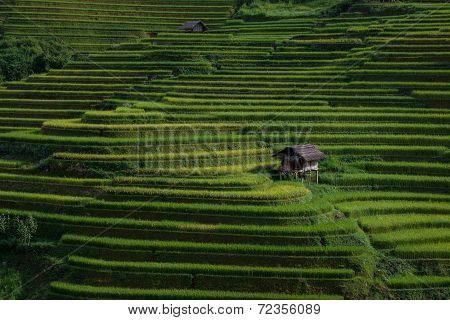 Rice fields on terraced in sunset at Mu Cang Chai, Yen Bai, Vietnam.