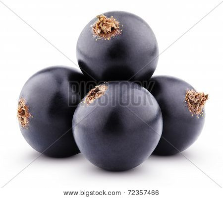 Black Currant Berries On White