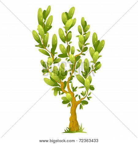 Cartoon Tree With Elliptical Leaves