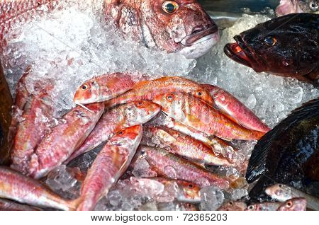 Some fish on stall display