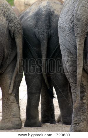 ElephantTailsCloseup
