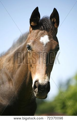 Portrait of a pretty purebred foal in summer pasture