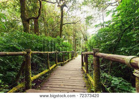Jungle Landscape. Wooden Bridge At Misty Tropical Rain Forest. Travel Background