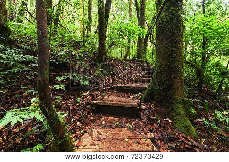 Trekking Trail Leading Through Jungle Landscape Of Deep Tropical Rain Forest. Travel Background