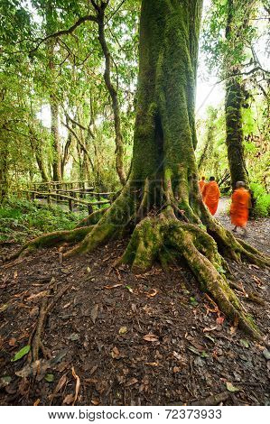 Buddhist Monks In Misty Tropical Rain Forest
