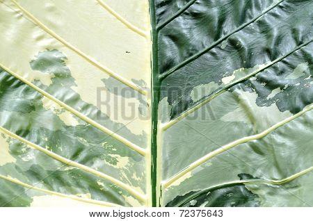 Leaf Nature Background