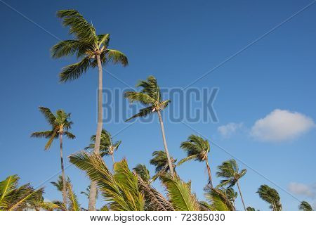 Palm trees diagonal setting on clear blue sky