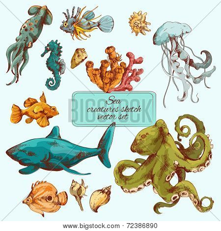 Sea creatures sketch colored