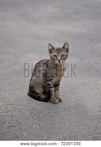 Stray Kitten Sitting On The Sidewalk