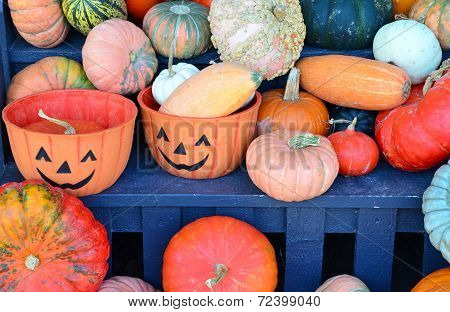 Colorful Halloween Pumpkins And Gourds Display