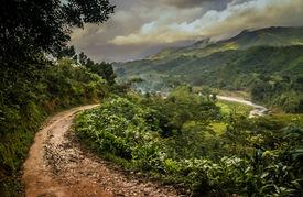 picture of rainforest  - Path through dense madagascar rainforest near Masoala National Park - JPG