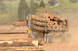 image of logging truck  - A log truck delivers a load of logs to the log yard at a lumber processing mill that specializes in small logs - JPG