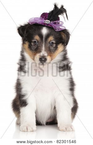 Puppy Collie On White Background