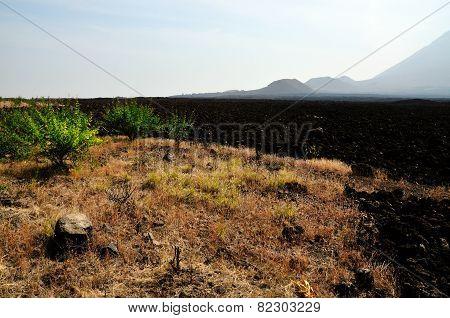Vegetation At The Base Of Volcano