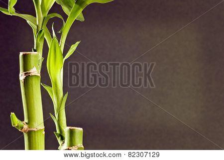Close Up Shot Of Bamboo On Dark Background