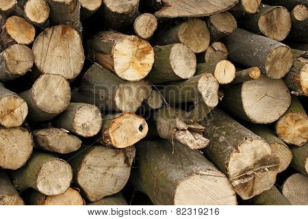 Pile Of Hornbeam Chopped Logs Close-up