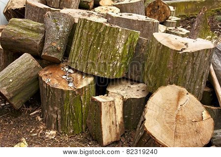 Pile Of Big Hornbeam Chopped Logs