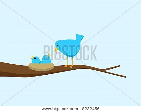 Blue Bird Feeding Hungry Chicks