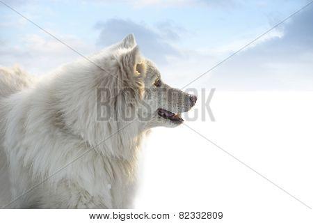 Happy Hairy White Dog