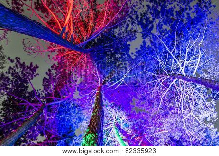 Event Winterlichter  In The Palmgarden