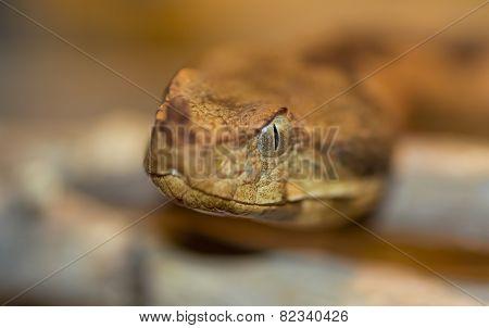 Macro of a snake head