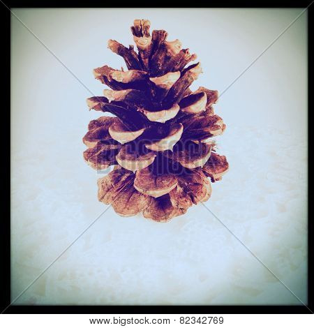 Instagram filtered image of a pine cone