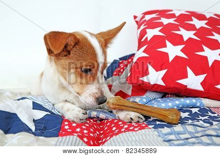 Dog with rawhide bone on sofa