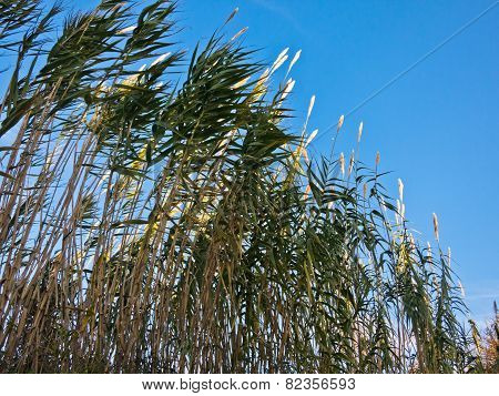 Green prairie grass against blue sky at late autumn in Istria