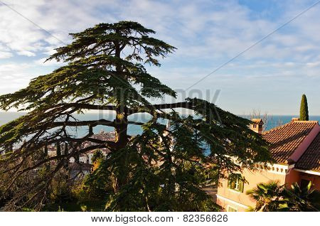 Villa on a hill surounded with pine and cypress trees in Piran