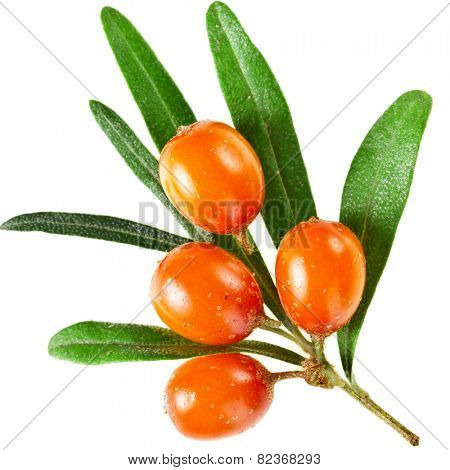 Sea buckthorn branch with berries isolated on white background