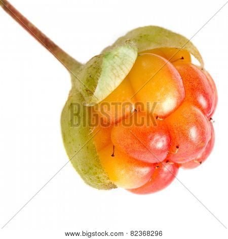 one fresh cloudberry close up macro shot isolated on white