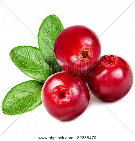 fresh cranberries cowberries isolated on white background