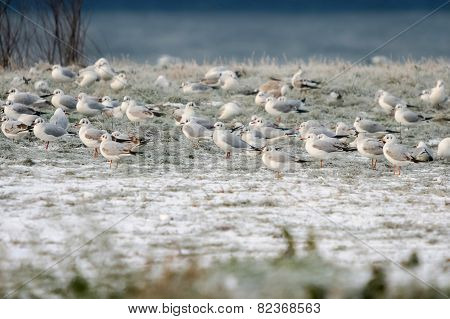 Seagulls Standing On Shore