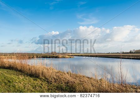 Dutch Polder Landscape