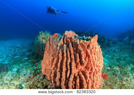 Scuba Diver And Large Barrel Sponge