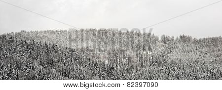 Panorama Snow Forest