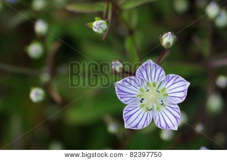 top view of wild flower