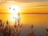 stock photo of rest-in-peace  - birds and the sun - JPG