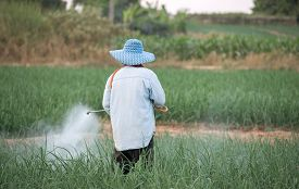 stock photo of pesticide  - farmer spraying pesticide at onion field in thailand - JPG