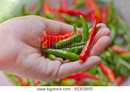 Woman Hand Holding Fresh Chili Peppers